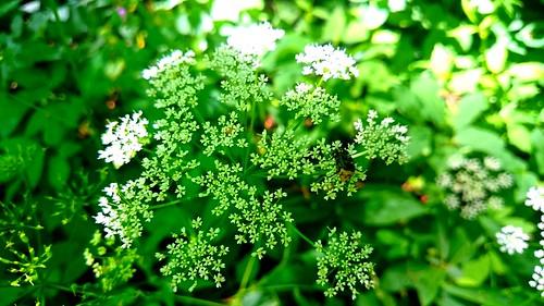 flower forest hungary szekszárd tolnamegye