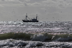 Fishermansfriend  (UK 253)