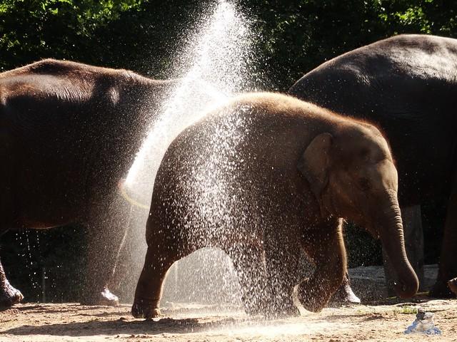 Zoo Berlin 05.08.2015 05