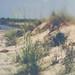 Beach Grass by D~Love