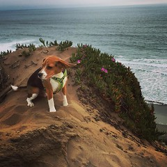 Need to let the wind blow in your hair every once in a while... Slowly making a new tradition of a Ft. Funston hike after a successful class at ACE Dog Sports! #lifeisgood