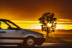 Magic Sunset | Tree and Car #207/365