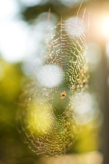 Spiderweb in the Afternoon Sun
