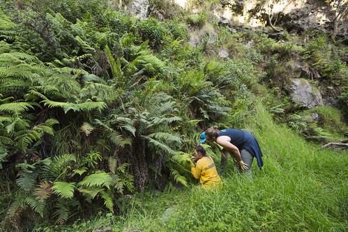 Volunteers Michelle Smith and Liat Portner, along with Restoration Technician Elyssa Kerr, examine one of Nakula's many species of native fern.