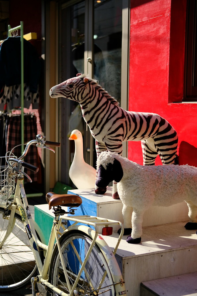 zebra, duck, sheep