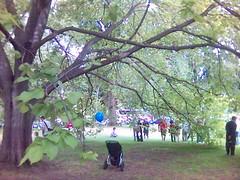 Big Tree in the Treasury Gardens
