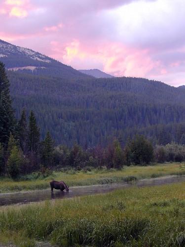 sunset vacation colorado moose rmnp rockymountainnationalpark