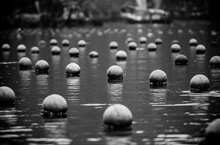 صورة Pearl Farm. asia2015 vietnam hạlongbay pearlfarm hảiphòng vn