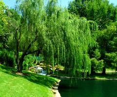 willow, garden, tree, river, plant, green, biome, vegetation, pond, waterway,