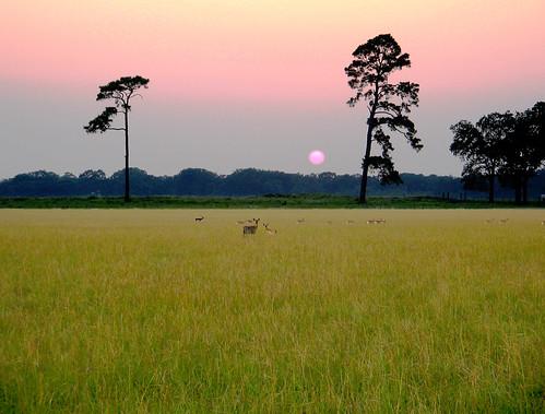 texas deer antelope sunset prairie unfound wildlife preserve geotagged geolat30115137 geolon95950212