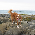 Toller on the rocks please