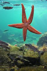 coral reef(1.0), animal(1.0), marine biology(1.0), invertebrate(1.0), marine invertebrates(1.0), fauna(1.0), underwater(1.0), reef(1.0), starfish(1.0),