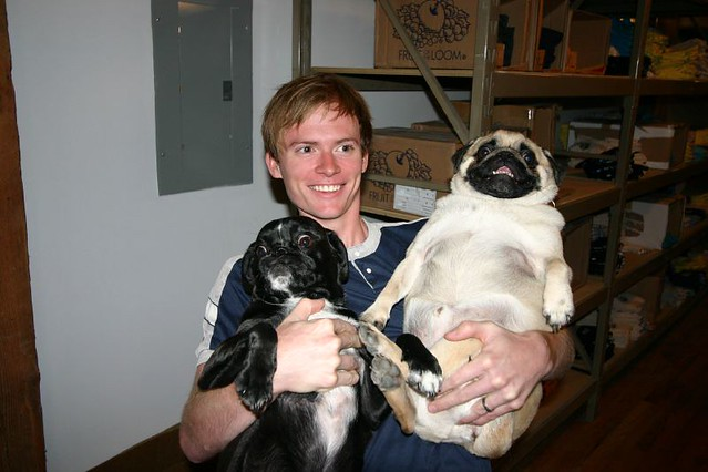 Fat Pug (Chewy) & Norman