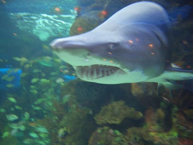 Image Result For Nashville Aquarium