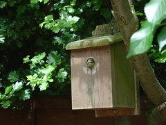 tree, birdhouse, green,