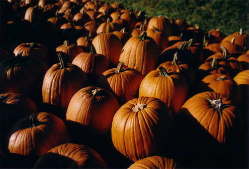 Pumpkins a-plenty