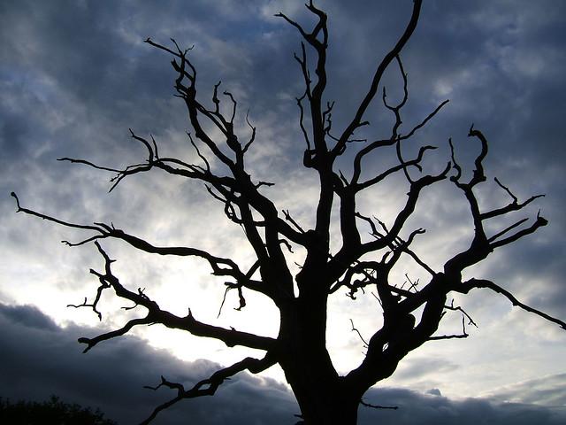 Spooky Tree Flickr Photo Sharing