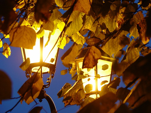 Leaves and Lamps