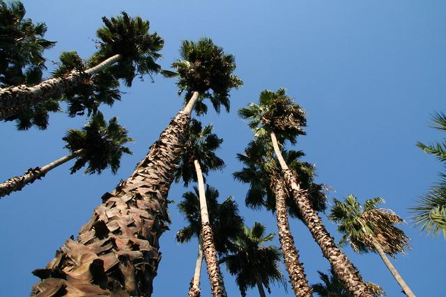 Visit To The Arboretum In Santa Anita Explore Life Of
