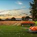pumpkin field by wvs