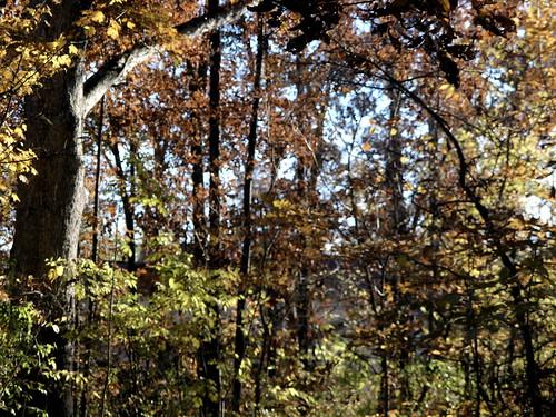 autumn foliage louisville kentucky