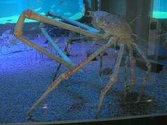 animal, seafood, marine biology, invertebrate, aquarium,