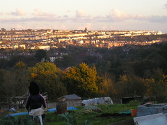 Evening on the Allotment