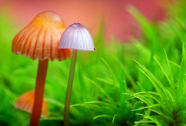 Fungi. Opposites Attract