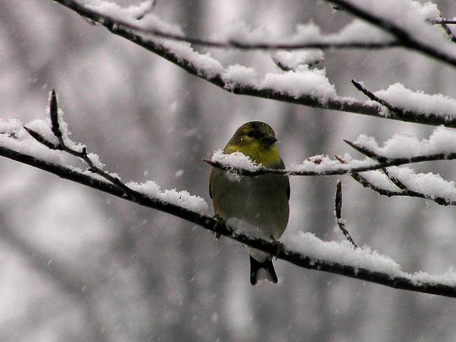 He Thinks Snow Makes Him Prettier