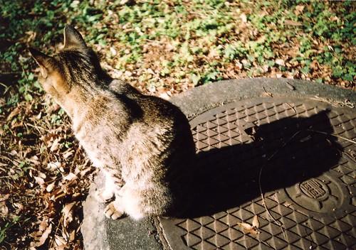 nekoze -猫背-