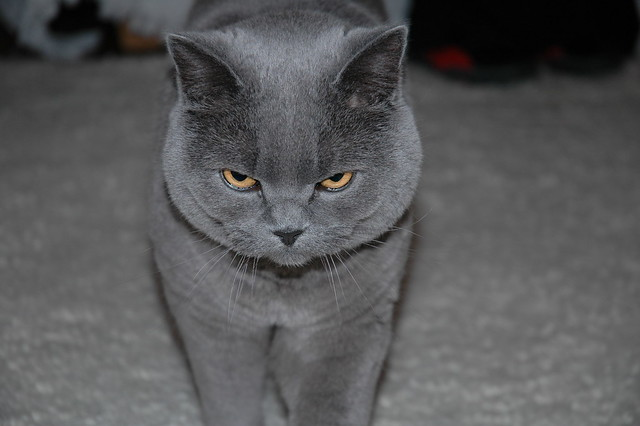 Cat Follow Gif