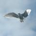 last gull by Stewart
