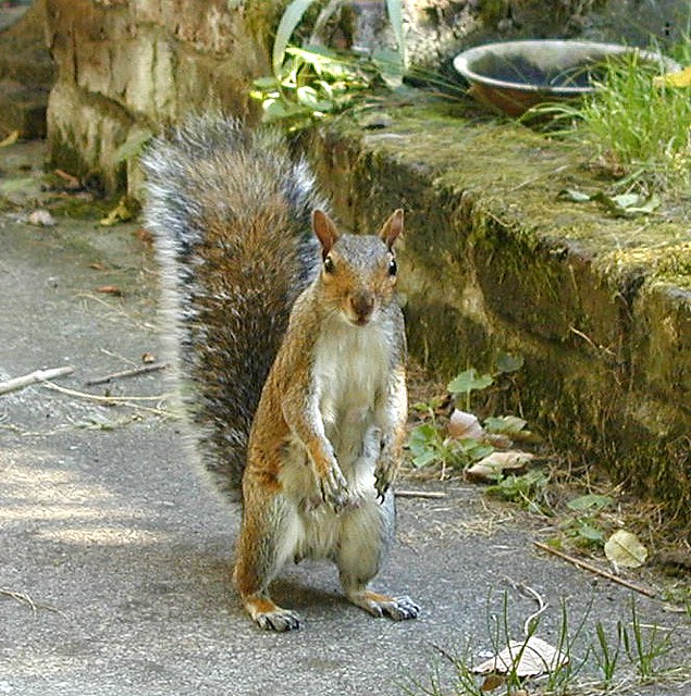 Squirrels Who Stand Like Max Schreck A Gallery On Flickr