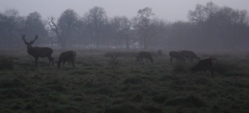 Out of the Mist Appeared Antlers...
