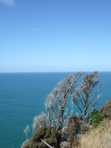newzealand geotagged catlins aotearoa biketour nuggetpoint kakapoint geolat4644789330645833 geolon1698169217278881