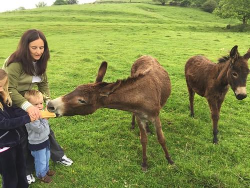 Donkey Fun