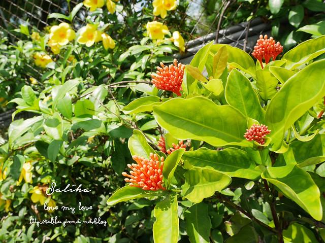 三峽蓮花景點 (16)
