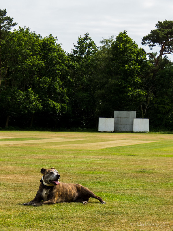 Jez relaxes on the cricket pitch