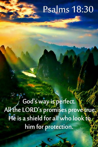 Psalms 18:30 NLT