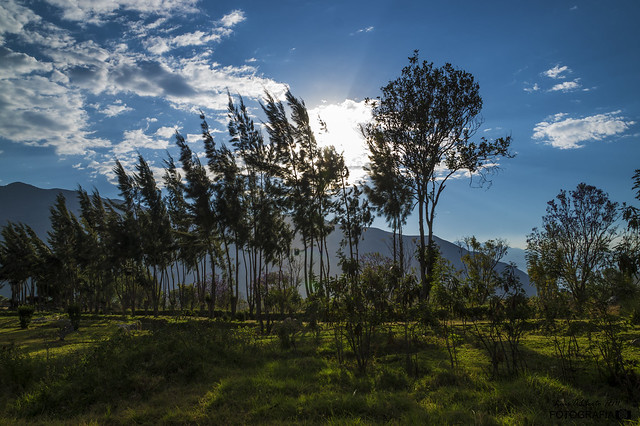 Camino de arboles en Campo Santo