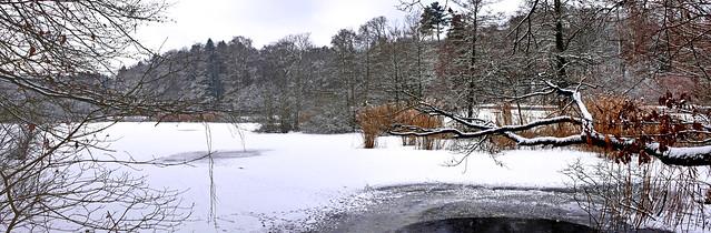 L'hiver sur l'étang