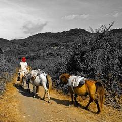 Sumbawa Horse at Lara Dompu Sumbawa Island NTB, Indonesia @folkindonesia @ngobrolkota  #indonesia #u_phy #infotourismindo #lumia1020 #switcheyesnap #WPphoto @natgeopro #nokia #idlumiaography #loveroyal3 #natgeo #instanusantara  #kofipon #lumia #nothingbut