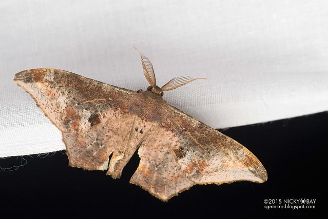 Moth - DSC_4061