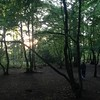 Coldfall #Woods #London N2 #sunset