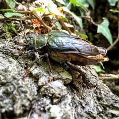 It's a #bugs life! #bicho #insecto supongo que es un #coleoptero ¿algún entomólogo en la sala?
