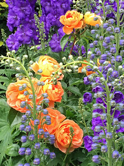 Roses with delphiniums