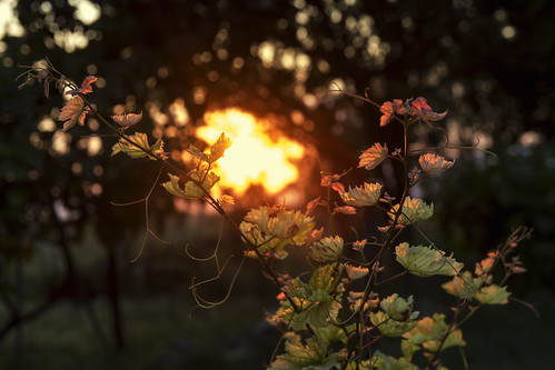 light sunset nature φύση δύση φυτό φωσ