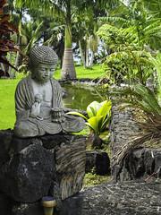 Hawaii-1559