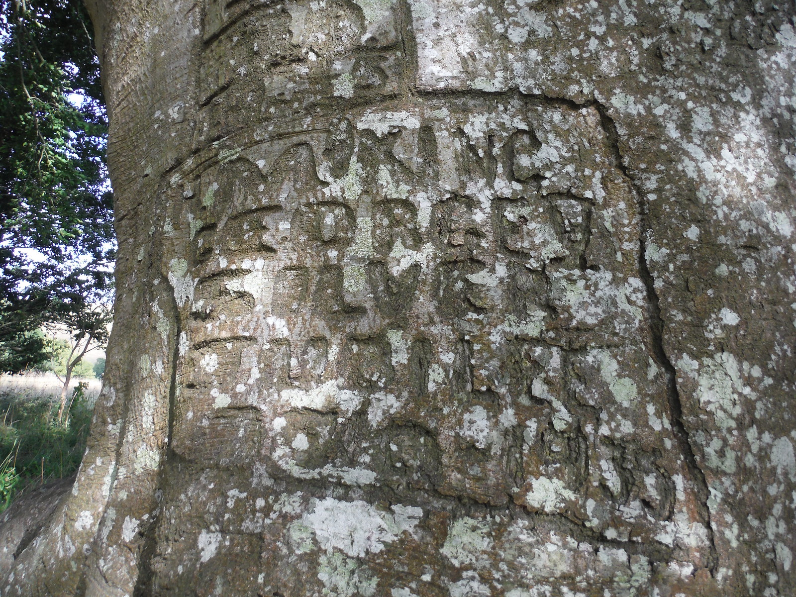 Graffito commemorating King George III's Golden Jubilee SWC Walk 254 Salisbury Circular