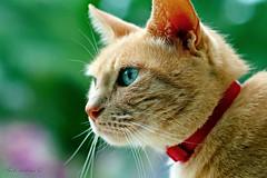 Feline Glance